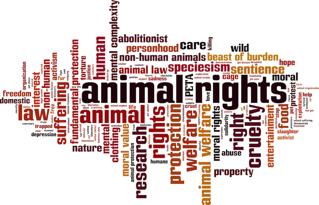How Not Knowing About Animal Rights Makes You a Rookie