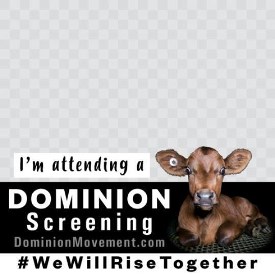 Do We Need Another Animal Welfare Movie?