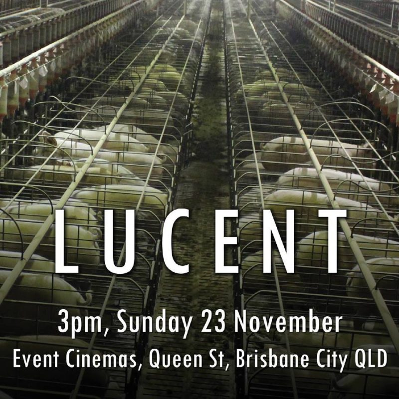 The Truth About Lucent - AusVegan.com.au
